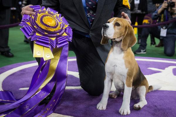 Resultado do Show de Cachorros de 2015